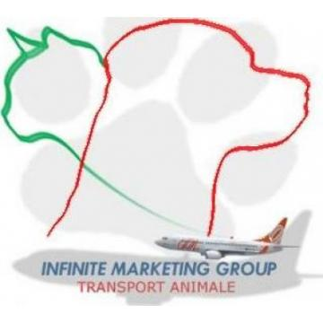 Infinite Marketing Group S.R.L.