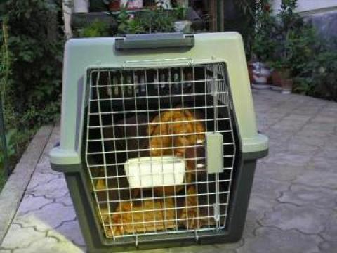 Transport cu etichetare corespunzatoare custi animale de la Infinite Marketing Group S.R.L.