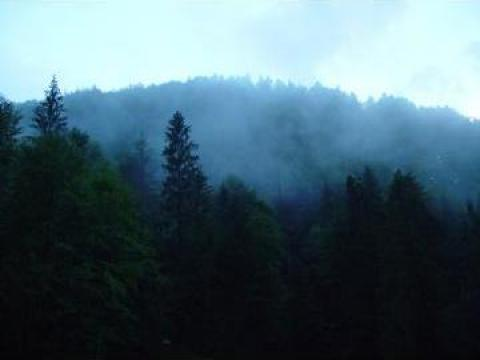 Teren pastravarie comuna Grinties la 3 km Durau de la I. I. Balahur