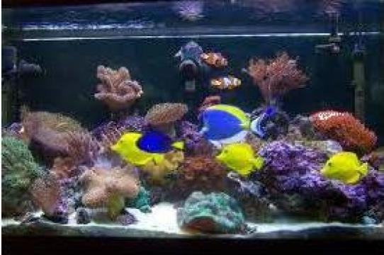 Acvarii marine de la Animal Aly Rrl