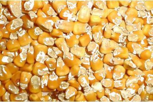 Porumb Non GMO, productia 2012