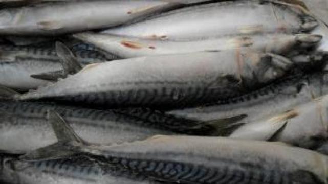 Peste congelat macrou de la Pescados Hermanos Lijo