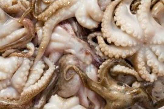 Caracatita pui 21-40 congelata de la Expert Factor Foods Srl