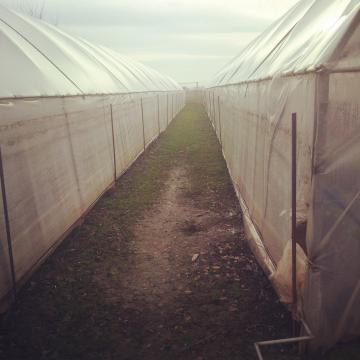 Solar agricol de la PFA Cornel