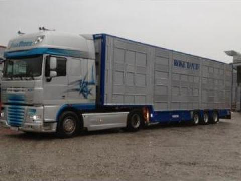 Transport animale vii de la RoalDavid Trans Spedition Srl