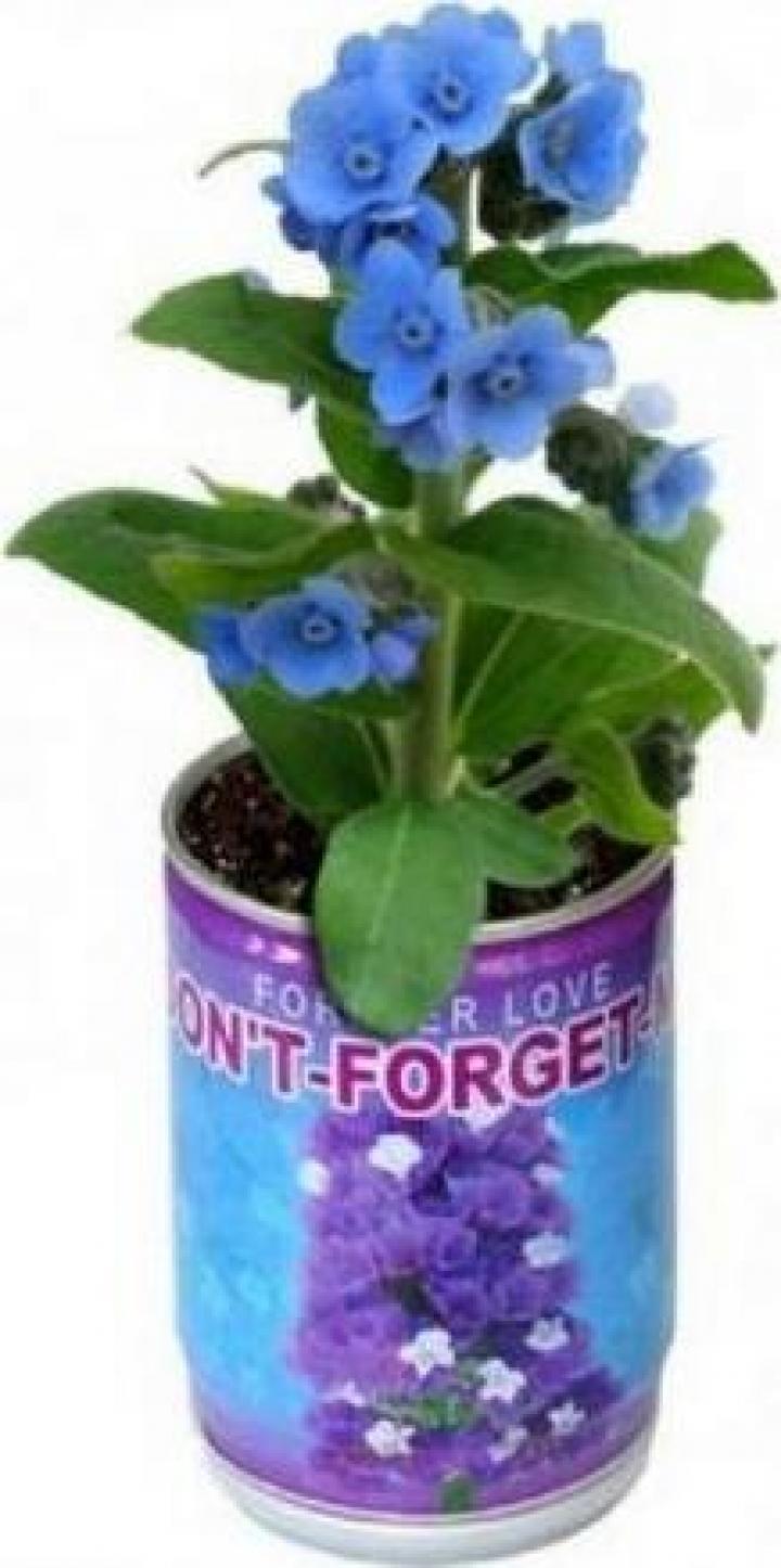Floare de Nu ma uita in conserva